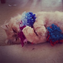 Cream coloured Persian cat laying on floor playing with knitted catnip toys